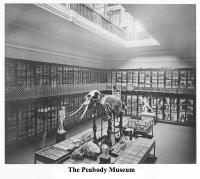 The Peabody Museum