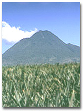 The Dole plantation in Hawaii