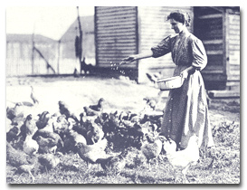 Sandburg and her chickens