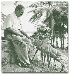 Schweitzer with fawns
