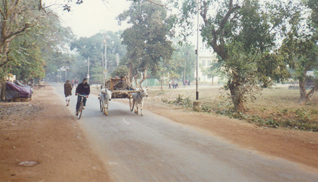 Oxcart on campus at Visva Bharat, Santiniketan