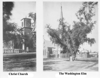 Christ Church & the Washington Elm