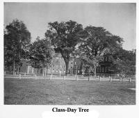 Class-Day Tree